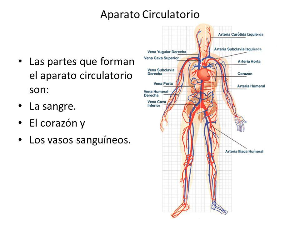 Cuadros sinópticos sobre el aparato circulatorio para descargar ...