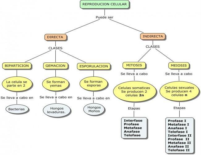 mapa conceptual de reproducciòn celular