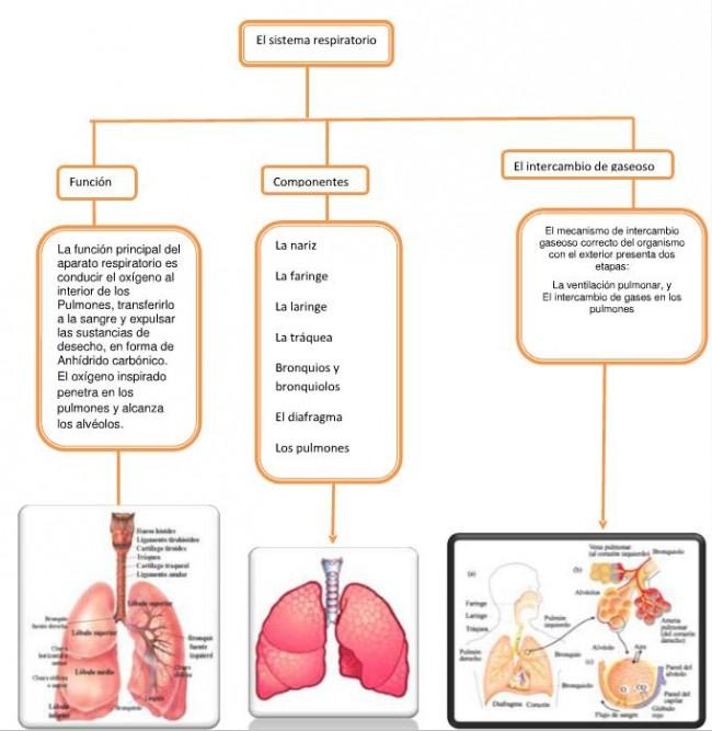 mapa-respiarcion