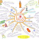 Mapas mentales y cuadros sinópticos sobre las células y sus divisiones