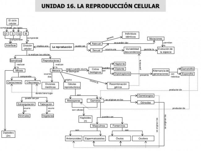 mapas-conceptuales-32-728