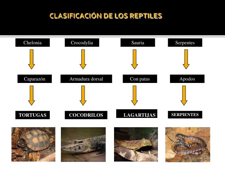 reptiles-7-728