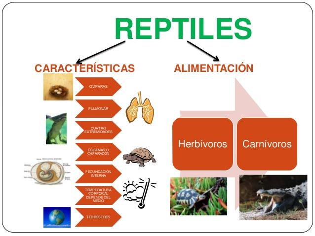 reptilesclasificacin-de-los-reptiles-y-anfibios-2-638