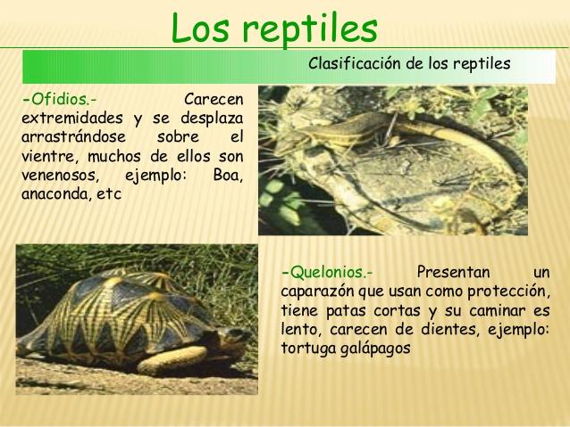 reptilesvertebrados-7-638