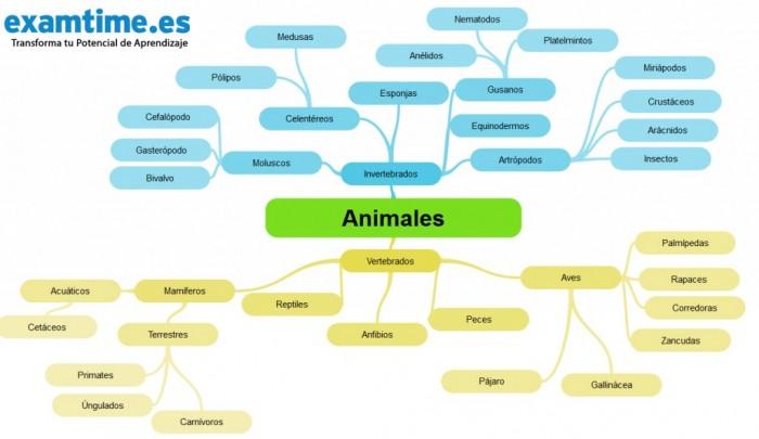 Cómo-Estudiar-Biología-Animales-1024x592