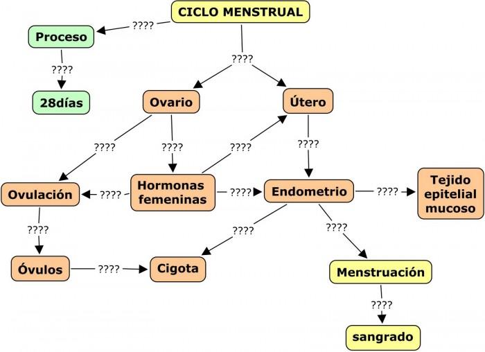 mapa menstrual Cuadros sinópticos sobre el ciclo menstrual | Cuadro Comparativo mapa menstrual