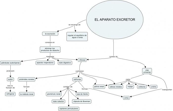 Cmap excretor Paula Cruzado.cmap