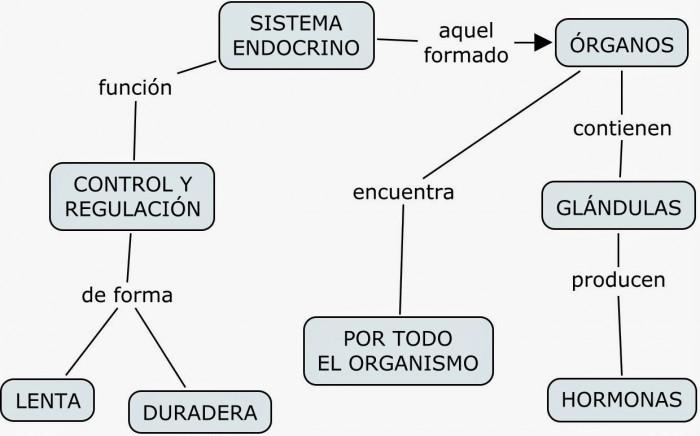 ENDOCRINO+1