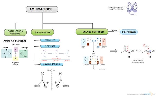 MAPA+AMINOACIDOS