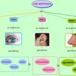 Cuadros sinópticos sobre los sentidos y sus órganos