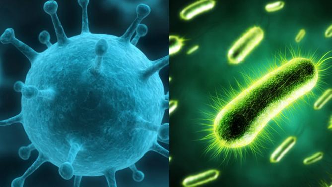 virus_bacterias_0