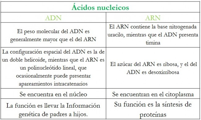 Adn y sus bases of dating 1