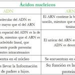 Cuadros comparativos sobre ADN y ARN: Diferencias