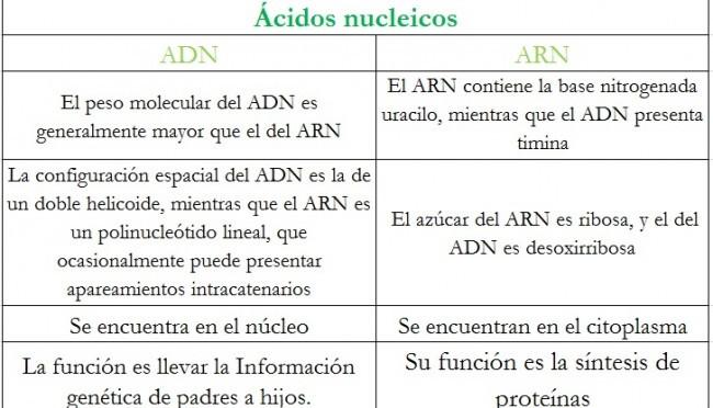 Cuadros Comparativos Sobre Adn Y Arn Diferencias Cuadro Comparativo