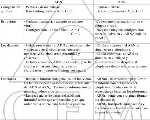 Cuadros Comparativos Sobre Adn Y Arn Diferencias Cuadro
