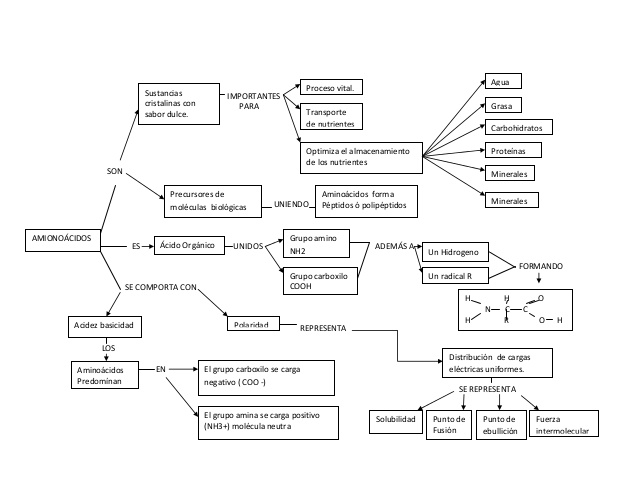 bioqumica-mapa-conceptual-2-638