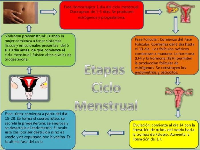 esquema-ciclo-menstrual-perla-1-728