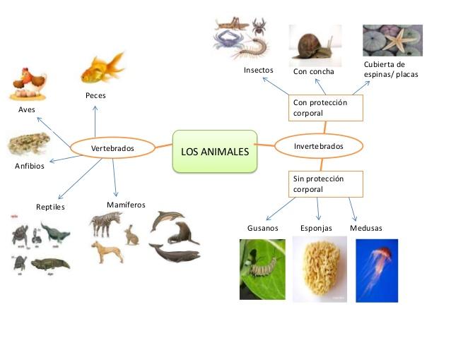 mapa-mental-animales-1-638