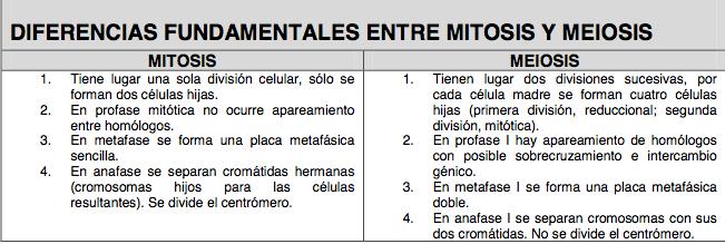 meioitosis y meiosis 2