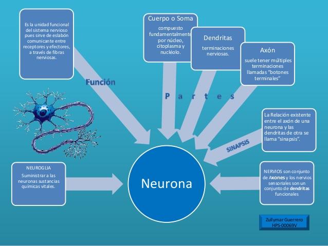 neuronamapa-conceptual-sistema-nervioso-7-638