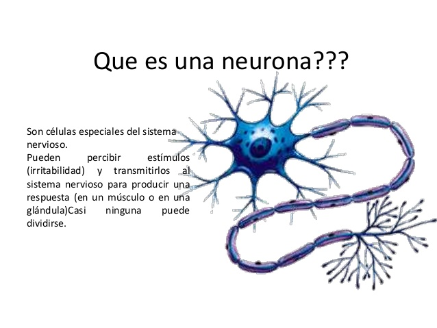 neuronas-3-638
