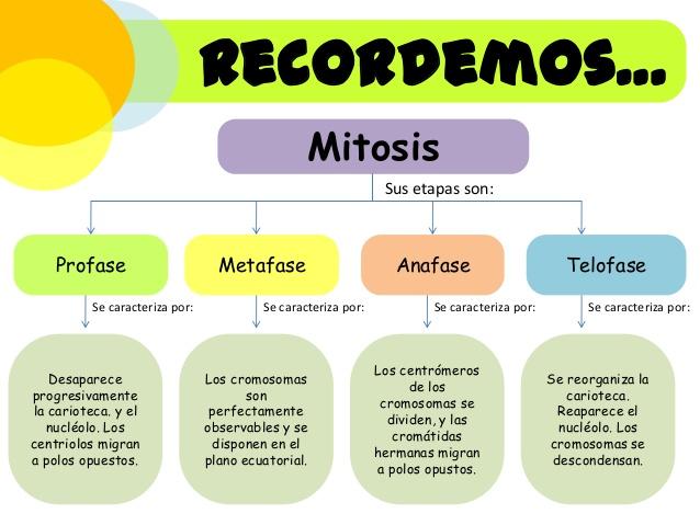 reproduccin-celular-divisin-celular-mitosis-meiosis-4-638