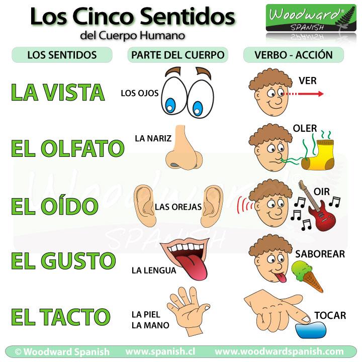 sentidos-5-senses-spanish