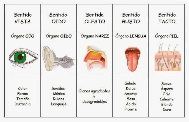 Cuadros comparativos de los rganos de los sentidos para for El divan de los sentidos
