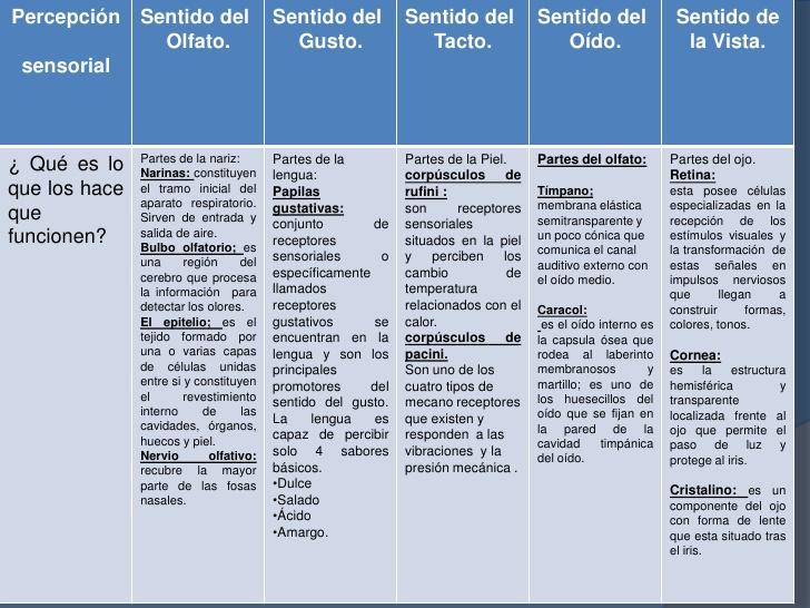 sentidoscuadro-comparativo-de-los-sentidos-3-728