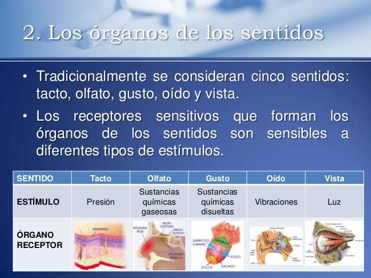 sentidoslos-receptores-5-728