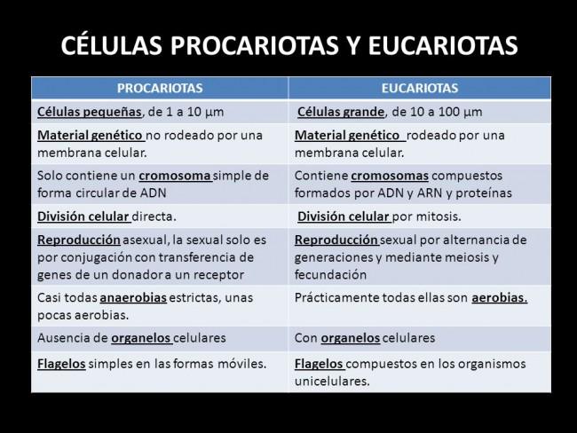 Cuadros comparativos entre Células Procariotas y Eucariotas | Cuadro ...
