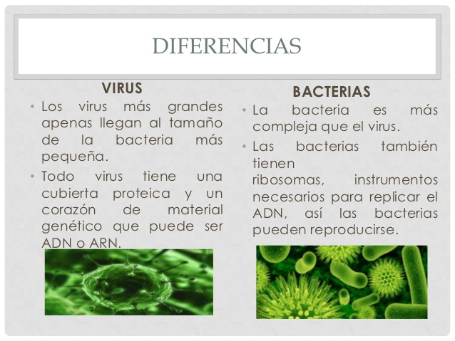 virus-y-bacterias-anny-3-638