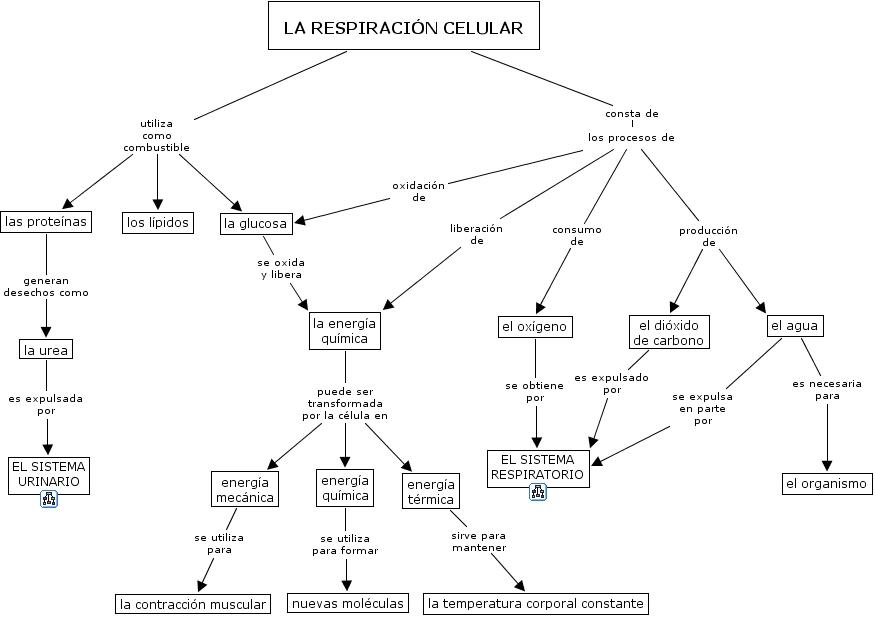 Cuadros comparativos entre fotosíntesis y respiración | Cuadro ...