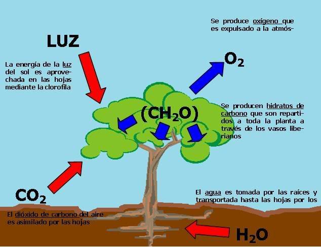 fotosintesis11