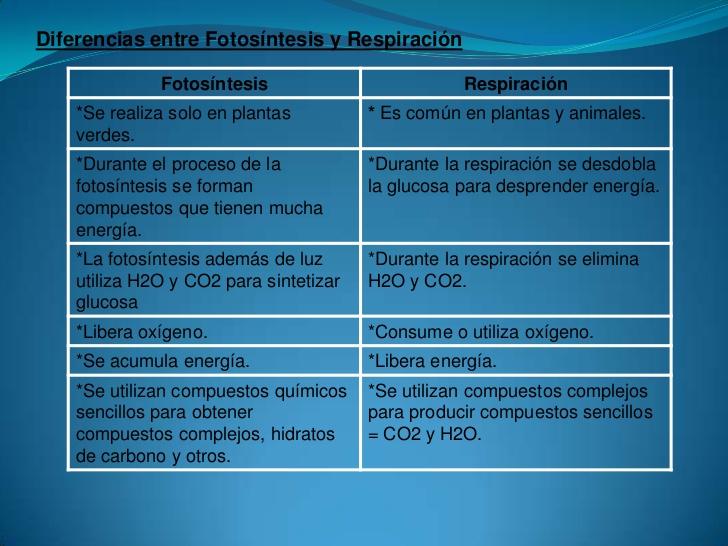 la-fotosintesis-y-la-respiracion-11-728