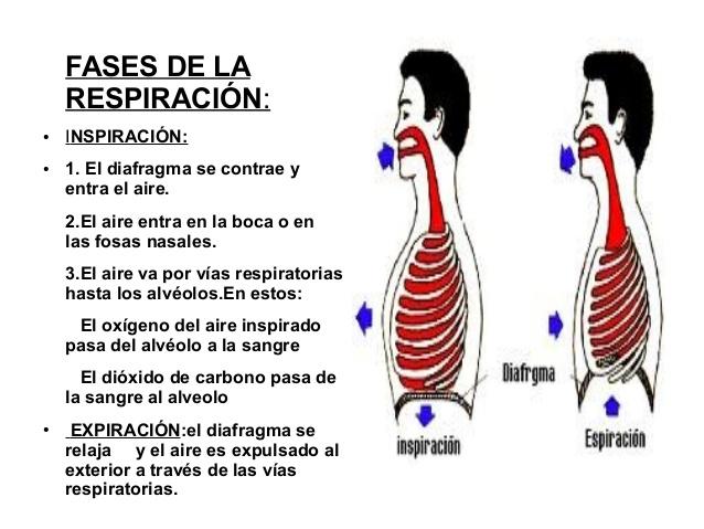 respiracin-borja-blas-3-638