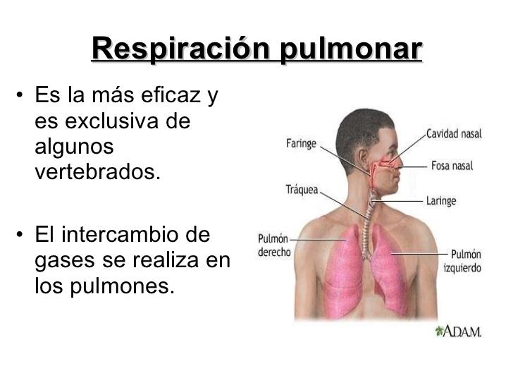 respiracin-en-animales-10-728