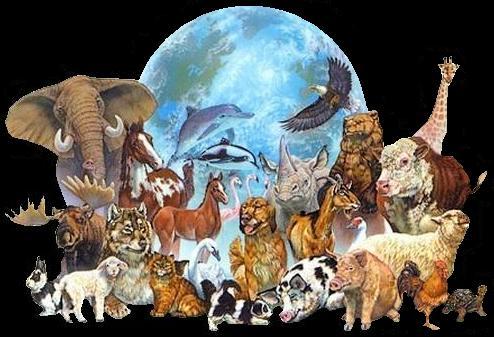 animales y el mundo, internet