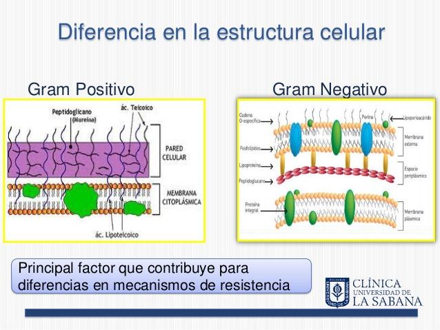 antibiograma-revision-14-638