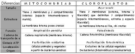 citodifmitcl