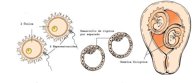 gemelosmellizos2-2