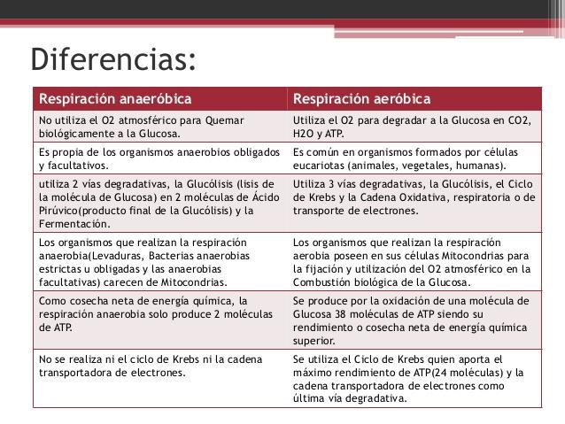 Carbohidratos Glucolisis Aerobia Y Anaerobia Diferencia Entre Glucolisis Anaerobia Y Aerobia