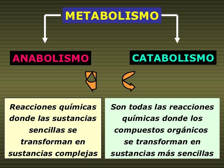 Cuadros Comparativos Entre Anabolismo Y Catabolismo Cuadro Comparativo