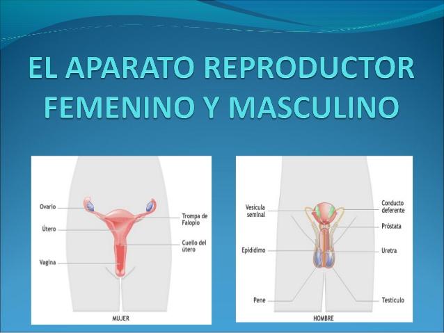 reproductor-masculino-y-femenino-1-638