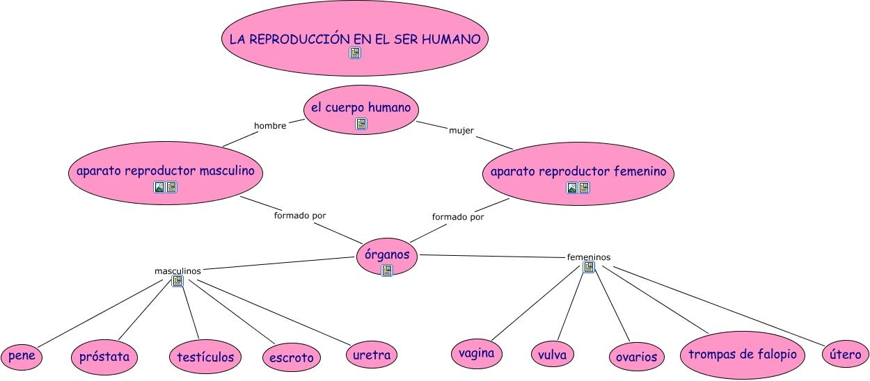 Cuadros comparativos entre sistema reproductor Femenino y Masculino ...