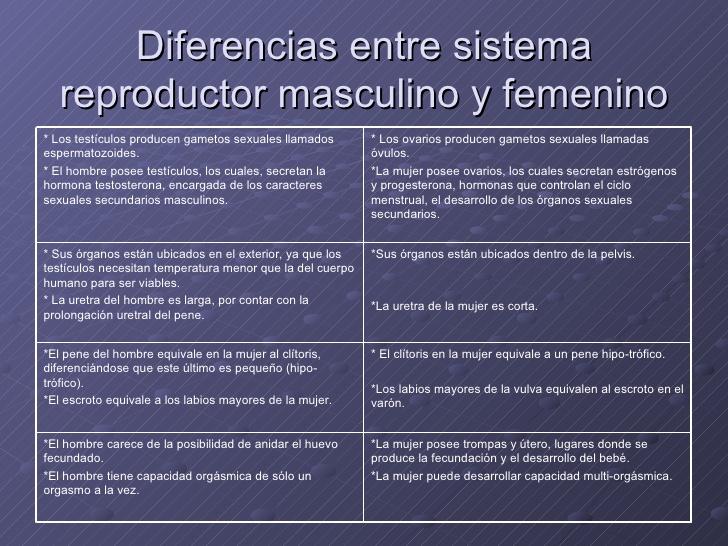 sistema-reproductor-masculino-29-728