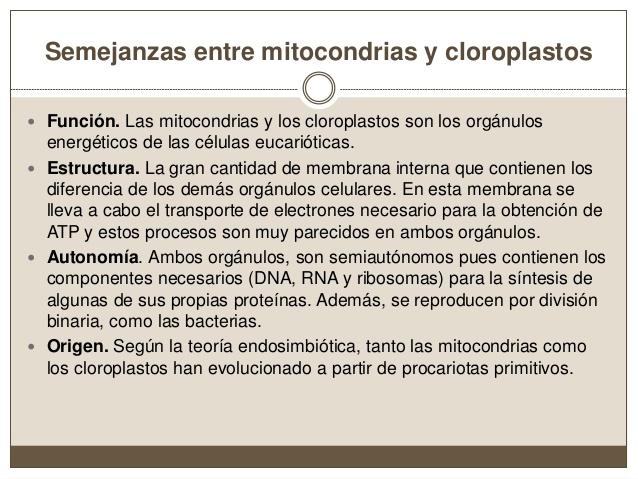 tema-10-mitocondria-y-cloroplastos-23-638