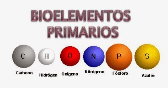 Bioelementos primarios 01
