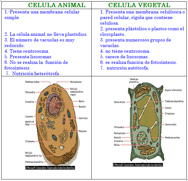 DIFERENCIAS ENTRE CELULA ANIMAL Y VEGETAL