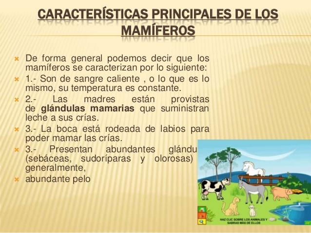 animales-mamferos-3-638
